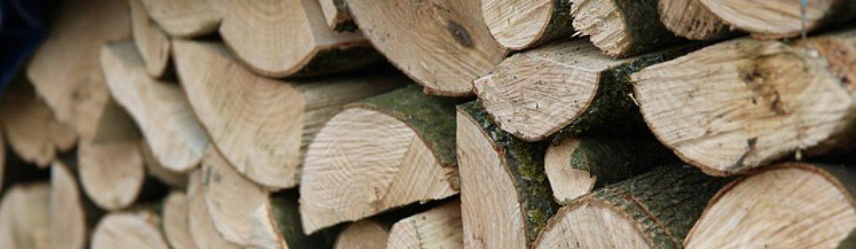 Vente de bois de chauffage sur pied