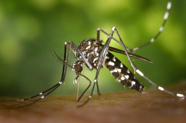 Participez à la surveillance du moustique tigre