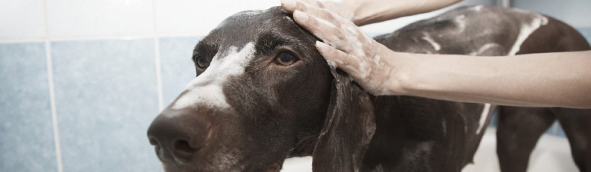 Service aux animaux et toilettage